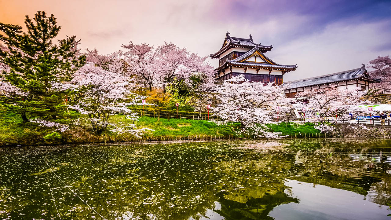 Japan- cherry blossom